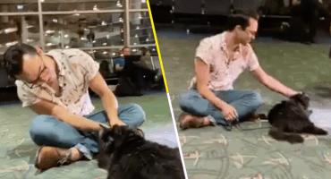 Awwww: Esta gatita regresó con su dueño después de perderse por 5 años