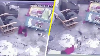 No todos los héroes usan capa: Gatito salva a bebé evitando que se caiga por las escaleras