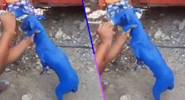 La hora sad: Captan a hombre pintando a un perrito para que 'se le quite la sarna'