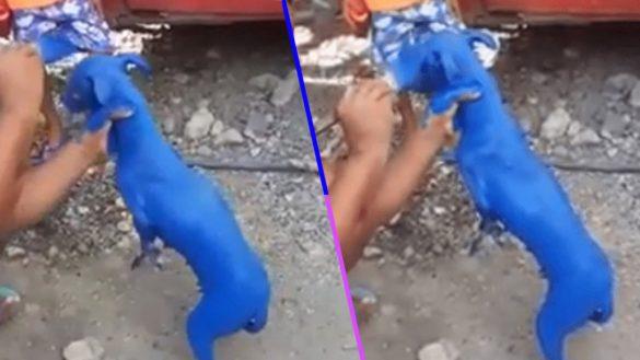 Chale: Captan a hombre pintando a un perrito para que