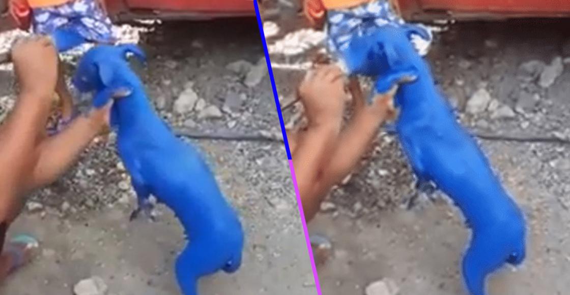 """Chale: Captan a hombre pintando a un perrito para que """"se le quite la sarna"""""""