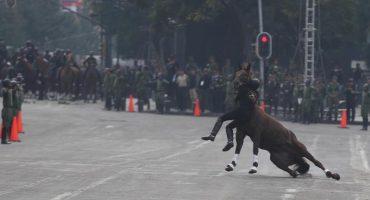 ¡Ouch! Un jinete se cayó y tiró a su caballo durante el desfile de la Revolución