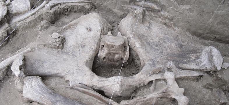 tultepec-restos-mamuts-inah