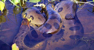 Valiente reacción: Unos ciclistas evitaron que una enorme serpiente devorara a su perro