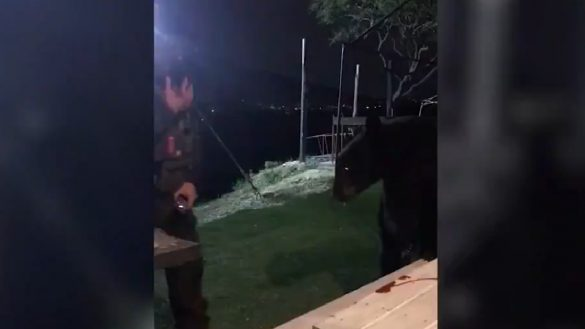 Un oso irrumpió mientras jugaban gotcha... y se pusieron a interactuar con él