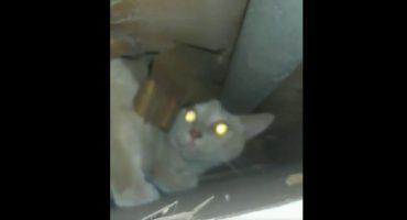 Encontró a un gato abandonado por sus vecinos dentro de su pared y logró rescatarlo