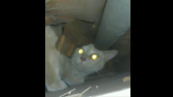 Encontró a un gato abandonado por sus vecinos atrapado en una pared y logró rescatarlo