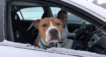 La magia de la navidad: Pitbull robado regresó a casa para Noche Buena gracias a varios activistas