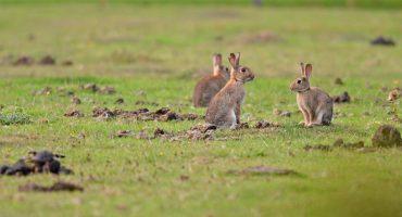 ¡Este es el fin! El conejo está oficialmente en peligro de extinción 😭