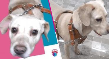 Para hacer la lloración: El dueño con cáncer terminal de esta perrita le busca un nuevo hogar antes de morir
