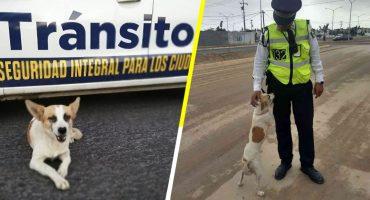 Ella es Esme, la perrita callejera que ahora es 'policía de tránsito' en Nuevo León