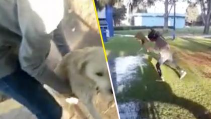 Mundo enfermo y triste: Captan cómo un joven universitario maltrató a un perrito callejero