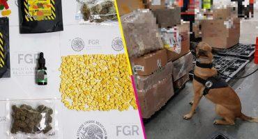 Gracias a un perrito, la FGR aseguró 70 mil pastillas en Toluca