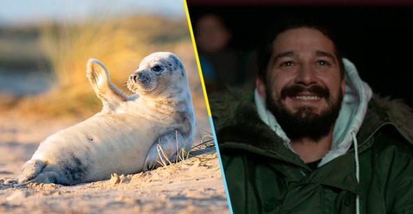 Esta bebé foca es tan fotogénica, que ahora es la sensación de internet