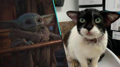 Dicen que este gatito se parece a Baby Yoda y ahora se volvió la sensación de internet