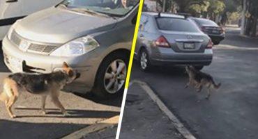 La hora sad: Mujeres abandonan a perrito en la calle y él corre detrás de su auto para alcanzarlas