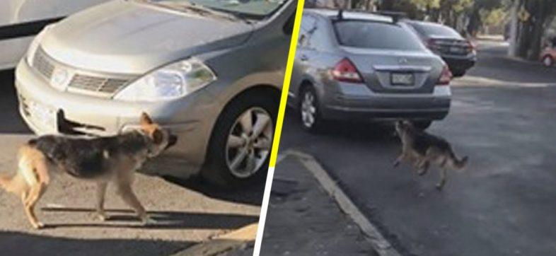 Mujeres abandonan a perrito en la calle y él corre detrás de su auto para alcanzarlas