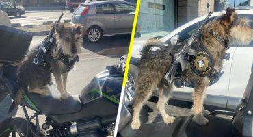Panadería de la CDMX contrata a un perrito como guardia de seguridad Y ES HERMOSO