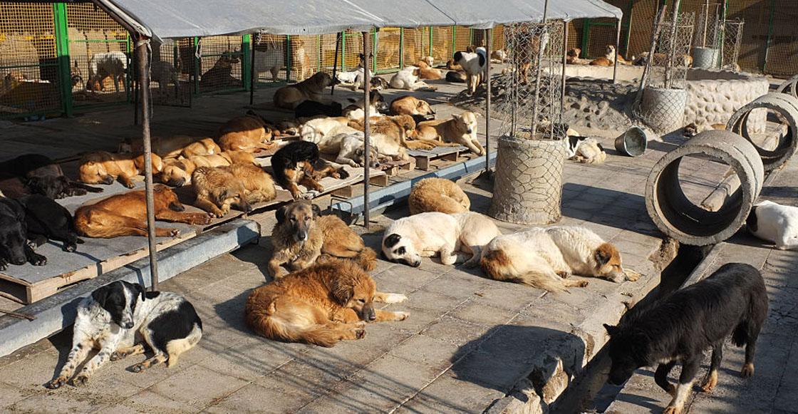 Vecinos de fraccionamiento en Michoacán denuncian envenenamiento masivo a perritos callejeros
