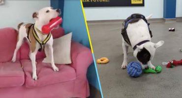 Perritos eligen sus regalos navideños en un refugio para animales
