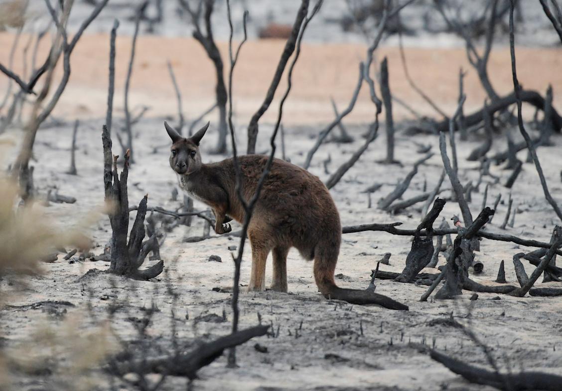 Australia-lluvias-incendios-forestales