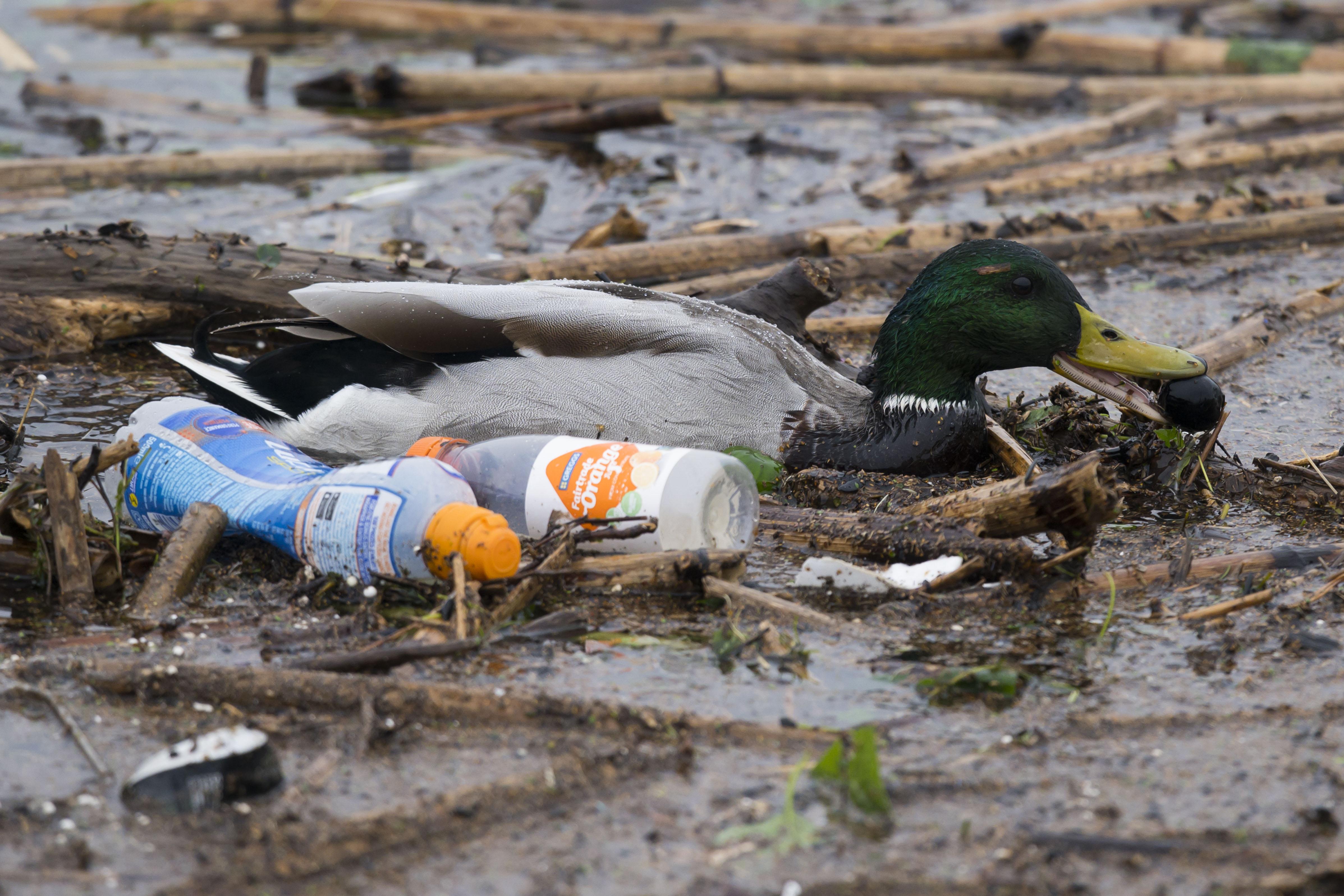 Estragos de la contaminación: Graban cómo una serpiente vomita una botella de plástico en la India