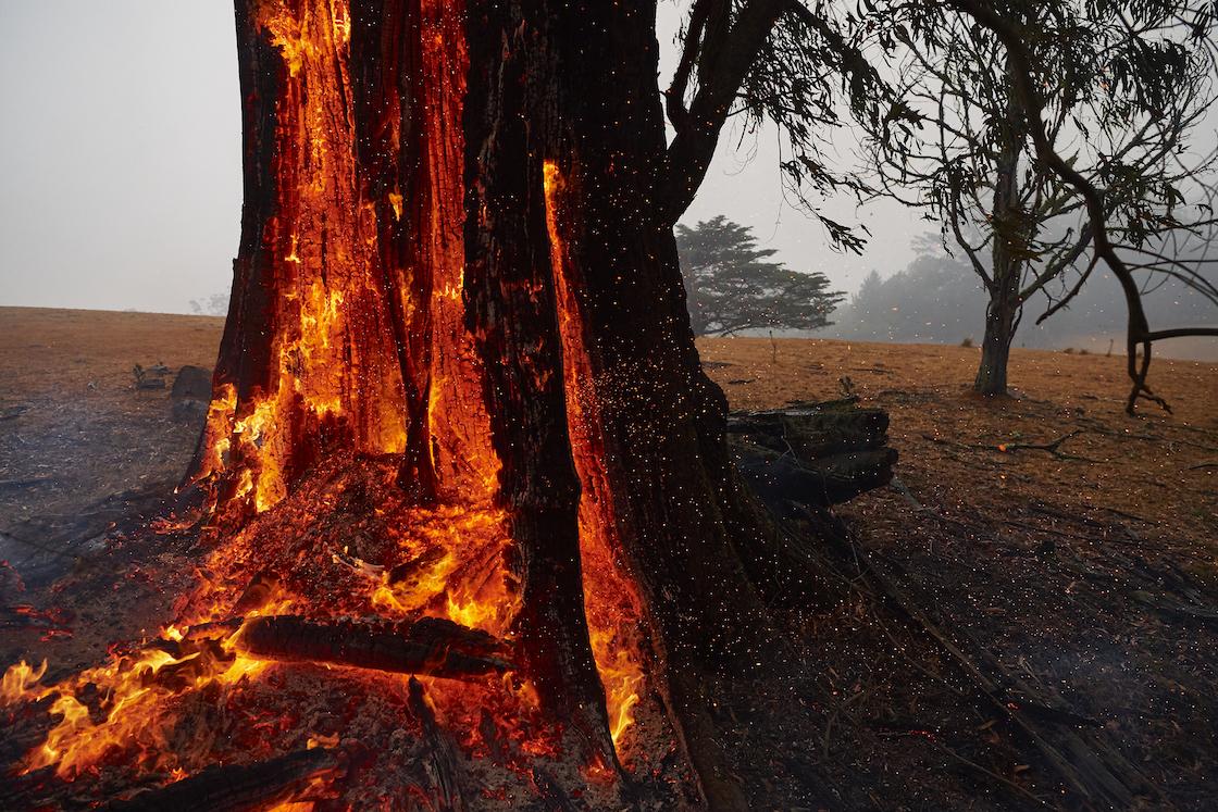 incendios-forestales-australia-reconstruccion