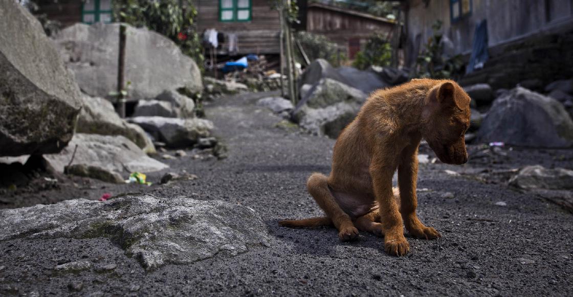 Nadie abandona a tantos perritos en Latinoamérica como los mexicanos