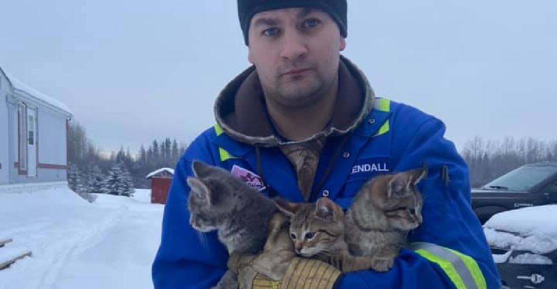 Héroe sin capa: Salva a tres gatitos de morir congelados con su taza de café