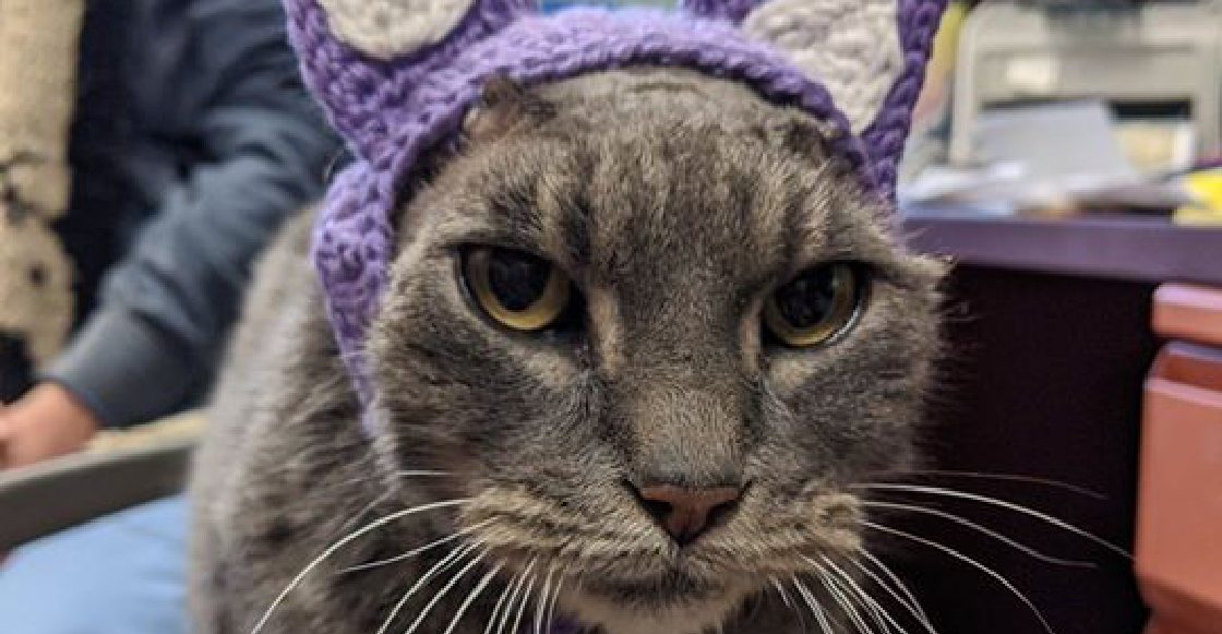 Lady, la gatita que perdió sus orejas por una infección y hoy vive muy feliz