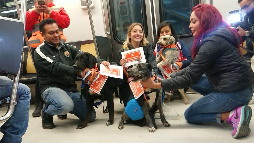 Perritos rescatados en el metro llevarán cartas de los niños chilangos a los Reyes Magos