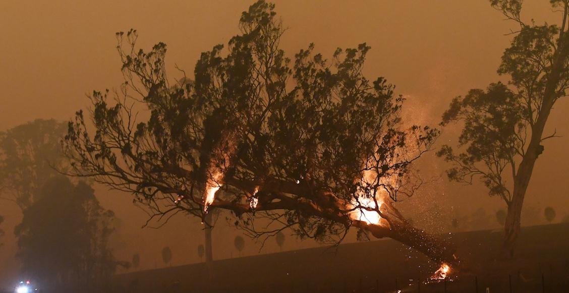 Australia-incendios-forestales-recursos-scott-morrison
