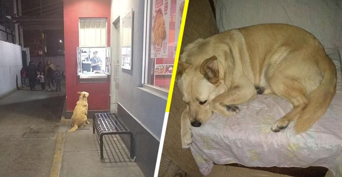 Güero: El perrito del Estado de México que cada noche cena en un establecimiento de pollo frito