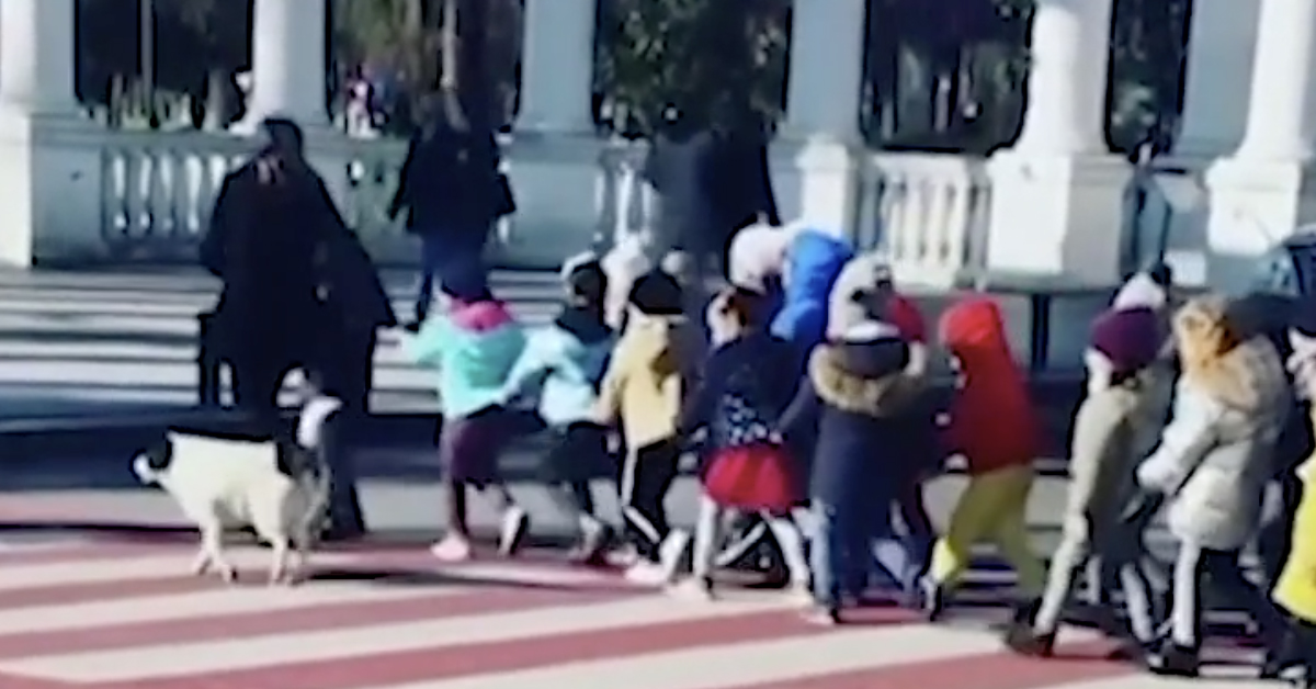 Suaves oficiales de tránsito: Perrito callejero detiene el tráfico para que niños crucen la calle