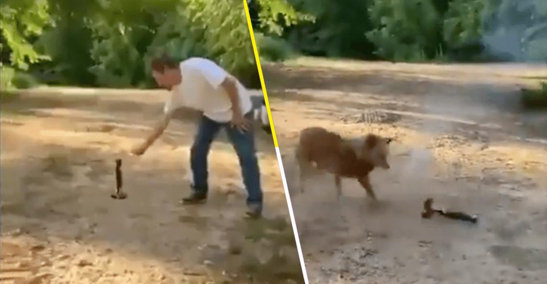 Un suave héroe: Este perro se vengó de su dueño y evitó que prendiera un cohete