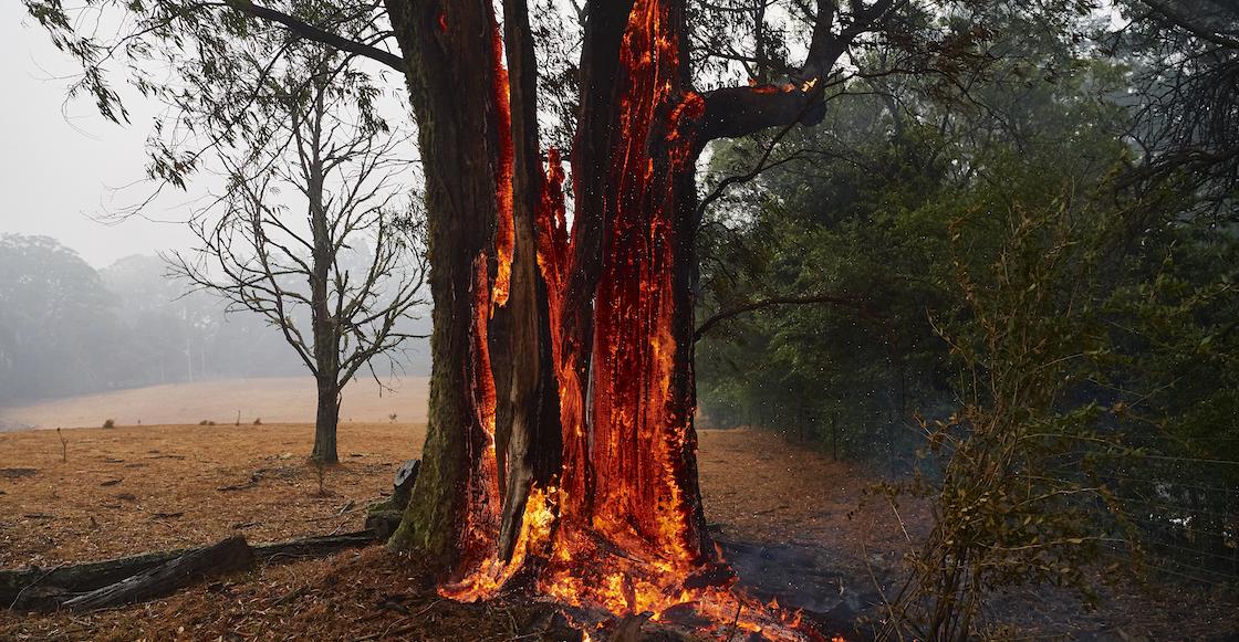 que-ocasiono-razones-causas-incendios-australia-muertos-animales-crisis-climatica-cambio