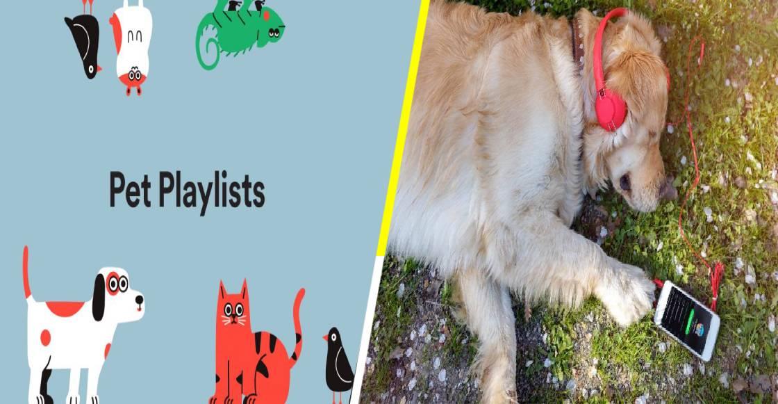 Spotify Pet Playlist, la nueva función de música para tus mascotas
