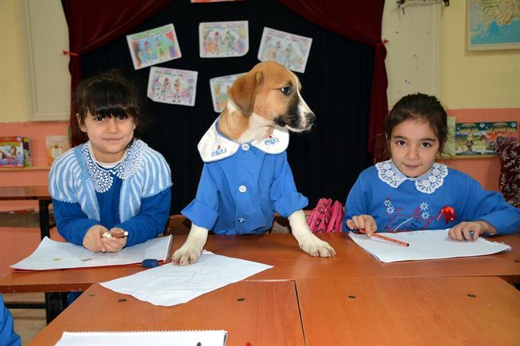 Findik, el perrito rescatado por maestros que ahora es un alumno más de su escuela