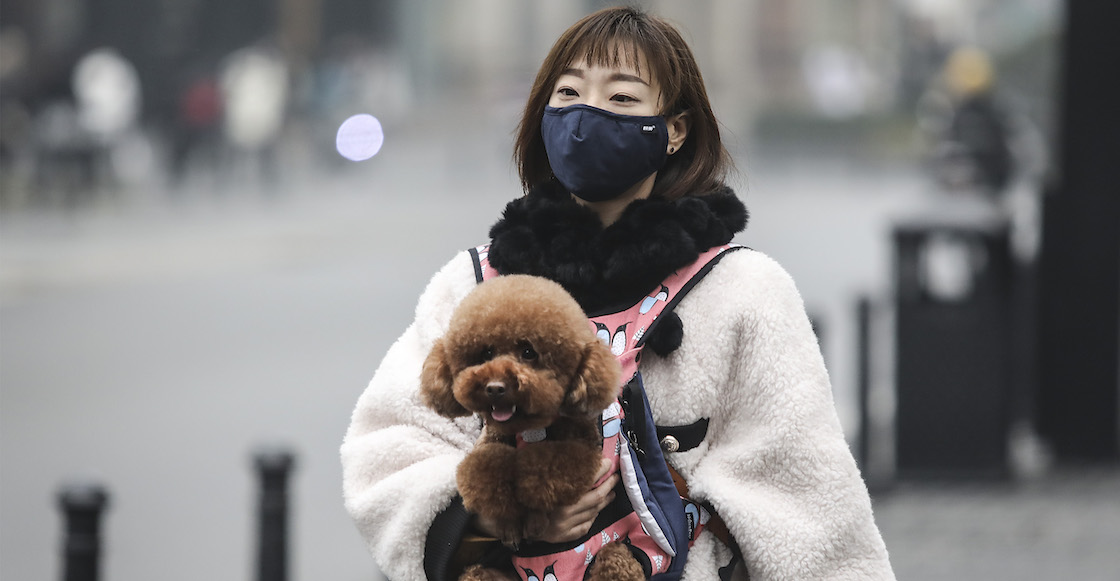 mascotas-coronavirus-china
