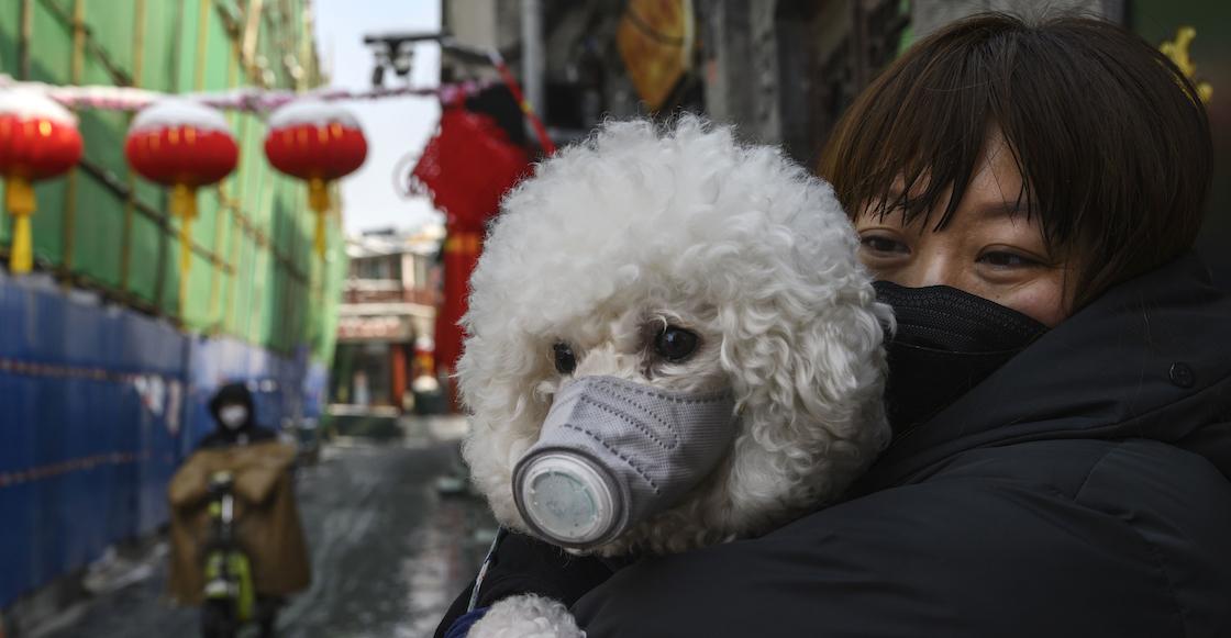 perrito-coronavirus-china-hong-kong