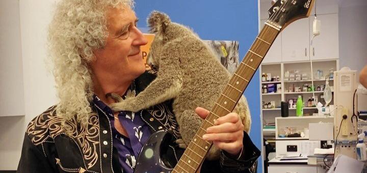Brian May de Queen toca para un koala salvado de los incendios en Australia