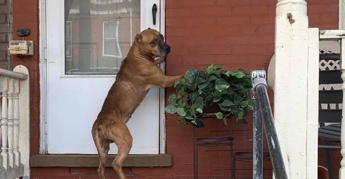 Perro abandonado esperó a sus dueños varios días después de que vendieron la casa