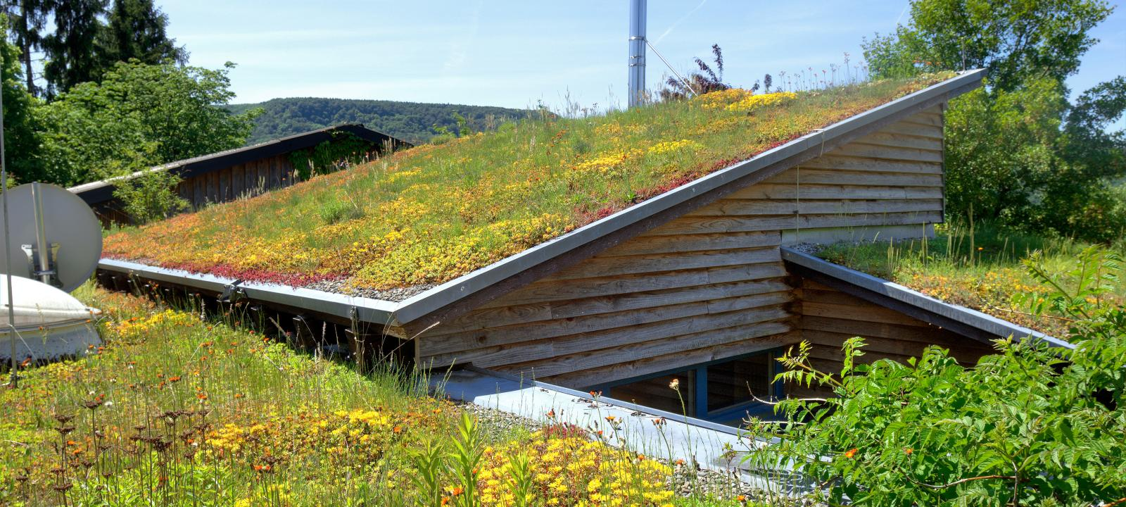 crisis-climatica-cambio-desastres-australia-techos-verdes-arquitectura
