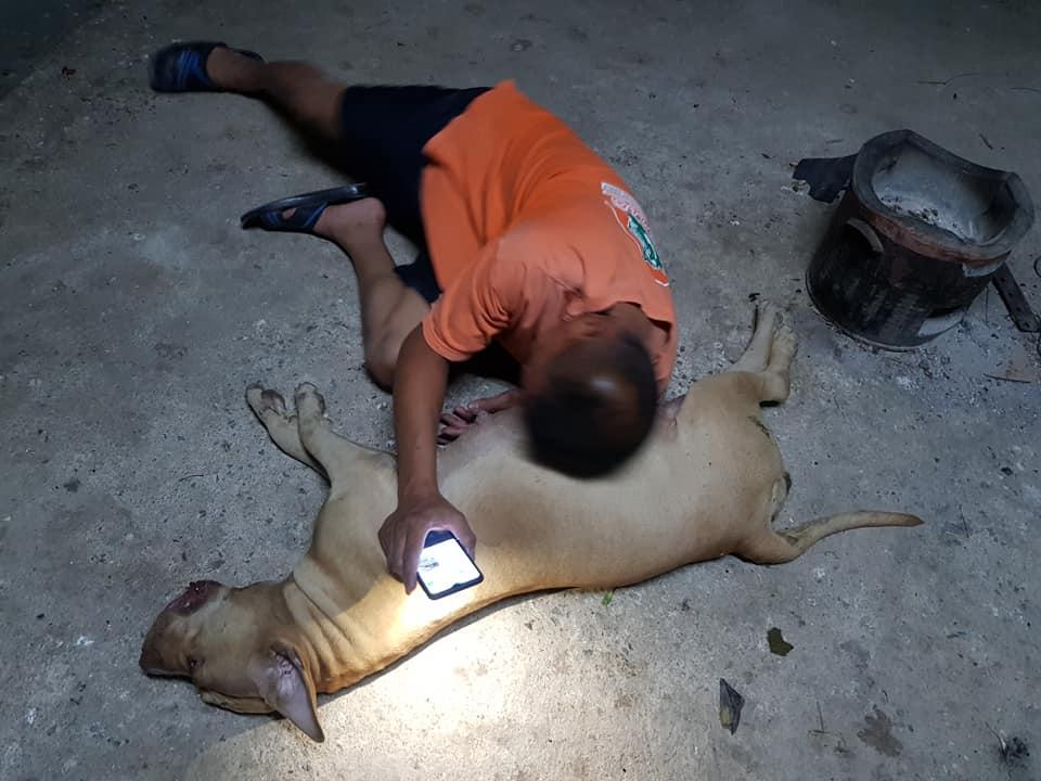 Perrita embarazada murió al enfrentar a una cobra para proteger a su familia