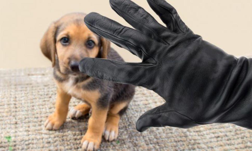 Iniciativa propone de 7 a 13 años de prisión por secuestro de mascotas