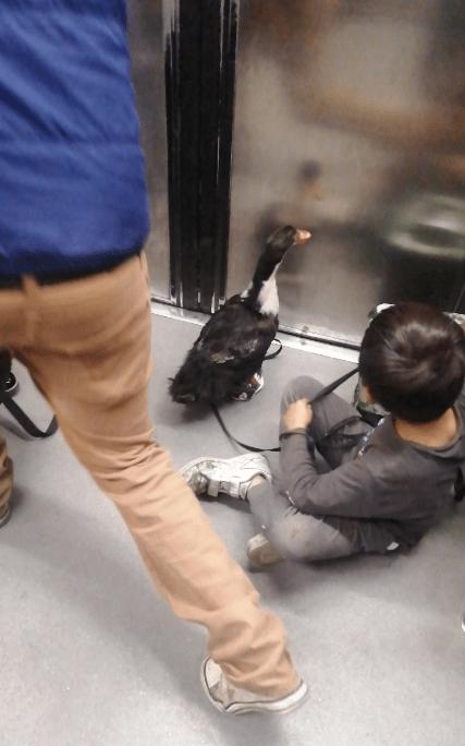 pato-viaje-metro-cdmx