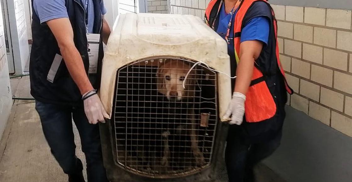 perros-rescatados-paot-cdmx