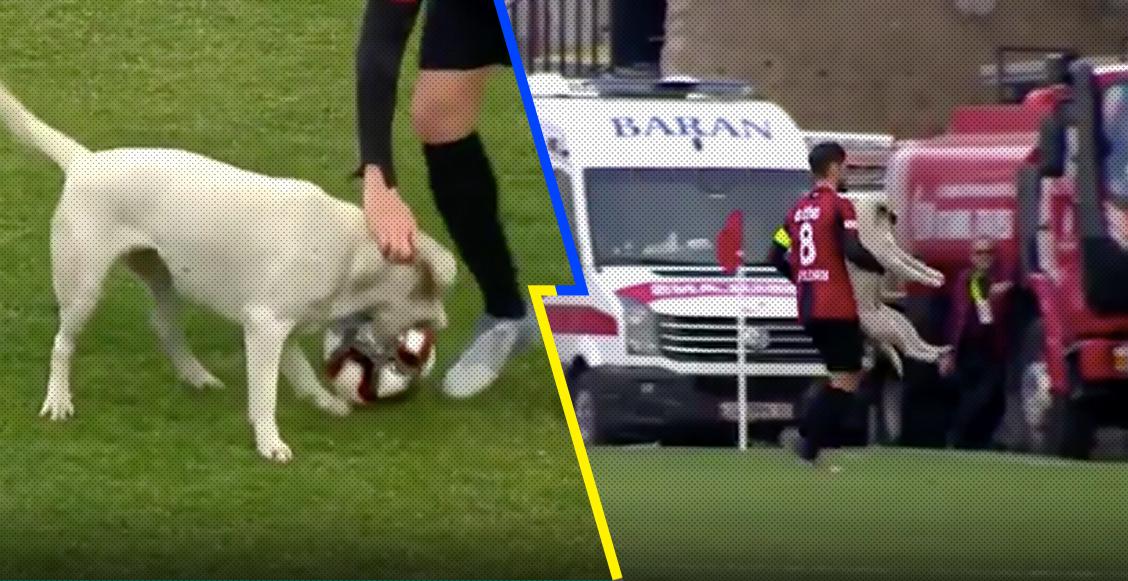 Perro ingresó al campo para 'cobrar un tiro libre', lo sacaron y se puso a jugar con el balón