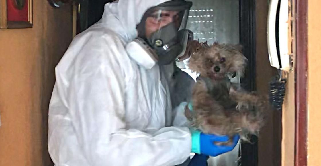 perros-coronavirus-mascotas
