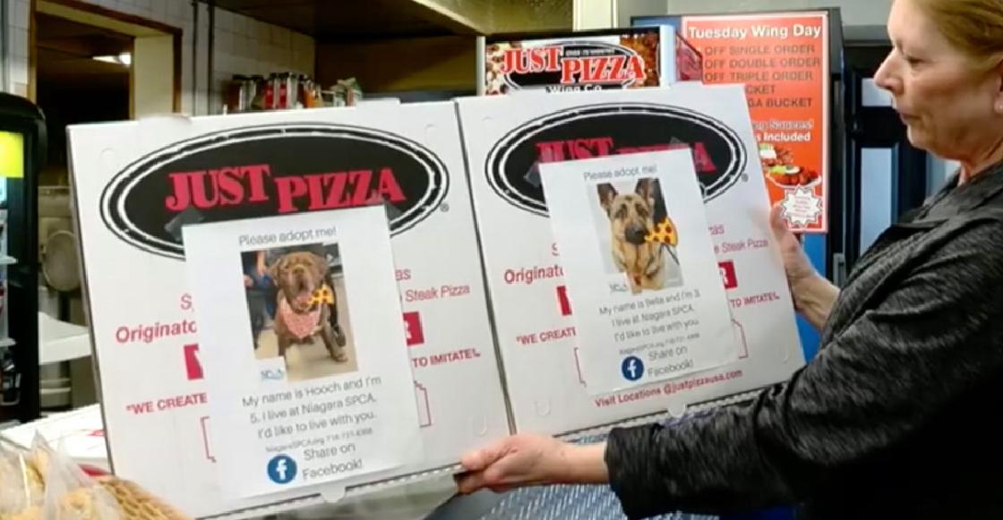 Pizzería usa sus cajas para ayudar a que los perros de un refugio sean adoptados